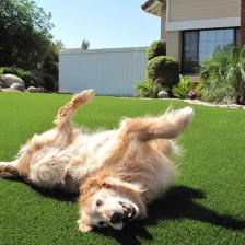 Un chien heureux sur du gazon artificiel
