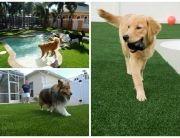 Césped artificial para perros y gatos