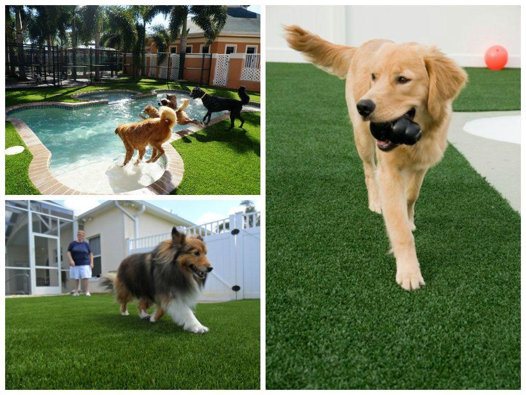 El césped artificial proporciona un espacio excelente para que nuestros perros o gatos jueguen al aire libre.